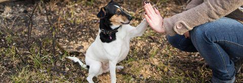 Dog Owners Handbook