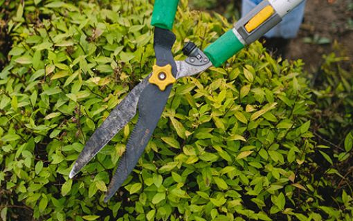 For safety's sake keep your trees and shrubs trimmed