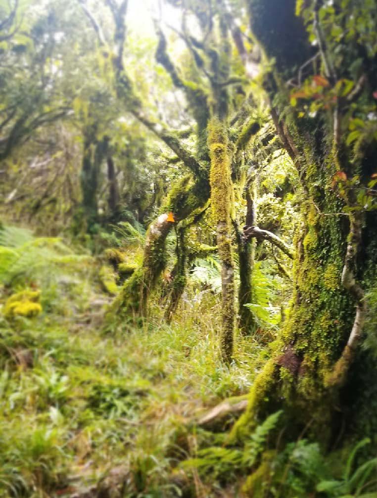Ruahine Forest Park